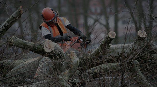 Batavia Tree Service